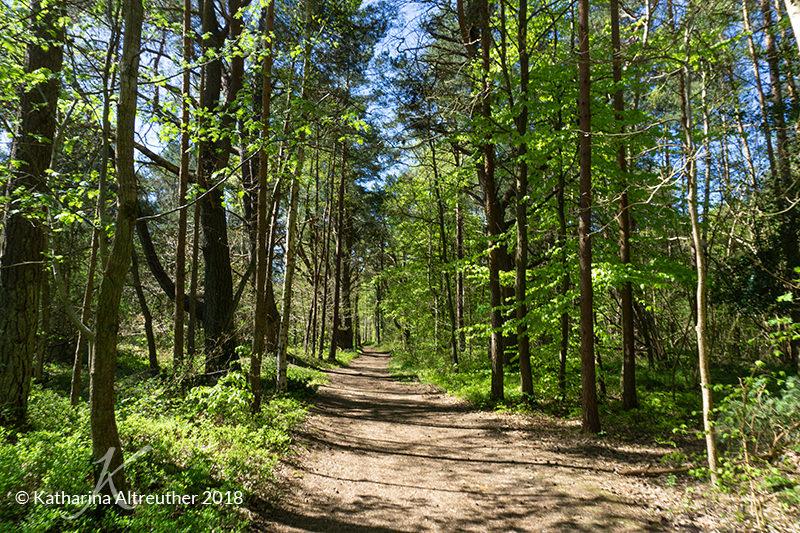 Tolle Wälder auf Rügen
