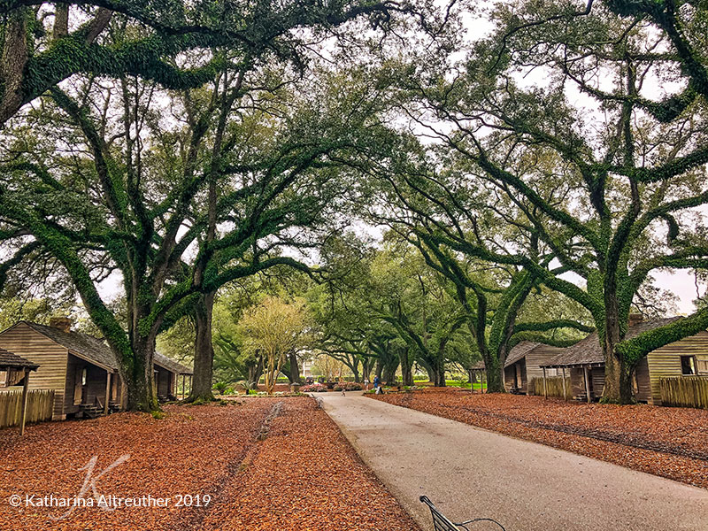 Die Oak Alley Plantation in der Nähe von New Orleans